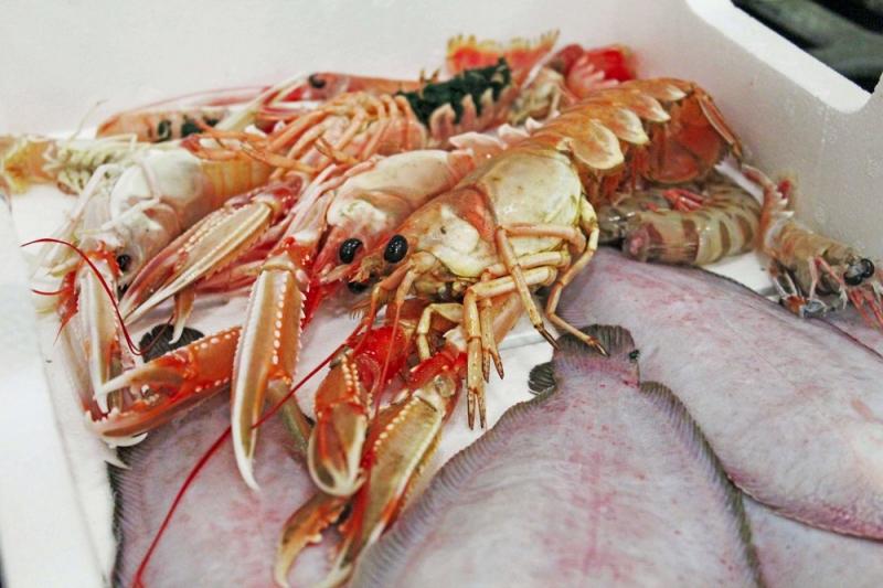 pesce fresco e pesce azzurro dell'adriatico. fornitori prodotti ittici adriatico san benedetto del tronto in tutta italia