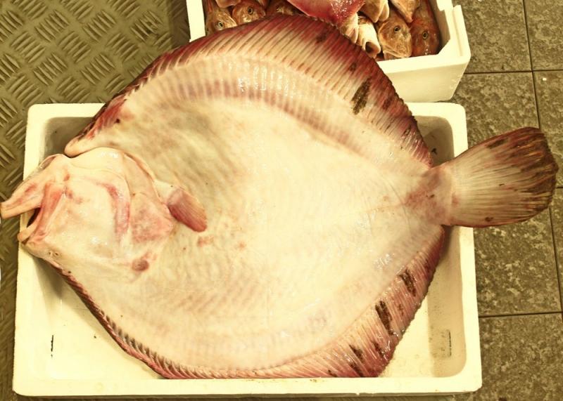 fornitori prodotti ittici san benedetto del tronto commercio prodotti ittici san benedetto del tronto prodotti ittici freschi