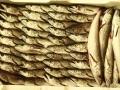 pesce fresco del mar adriatico per grossisti e fornitori prodotti ittici san benedetto del tronto