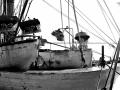 barche attraccate al porto di san benedetto del tronto cariche di pesce fresco appena pescato. storia e tradizione del mar adriatico.