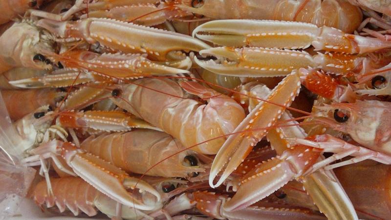 pesce fresco di ottima qualità. siamo i migliori fornitori prodotti ittici san benedetto del tronto