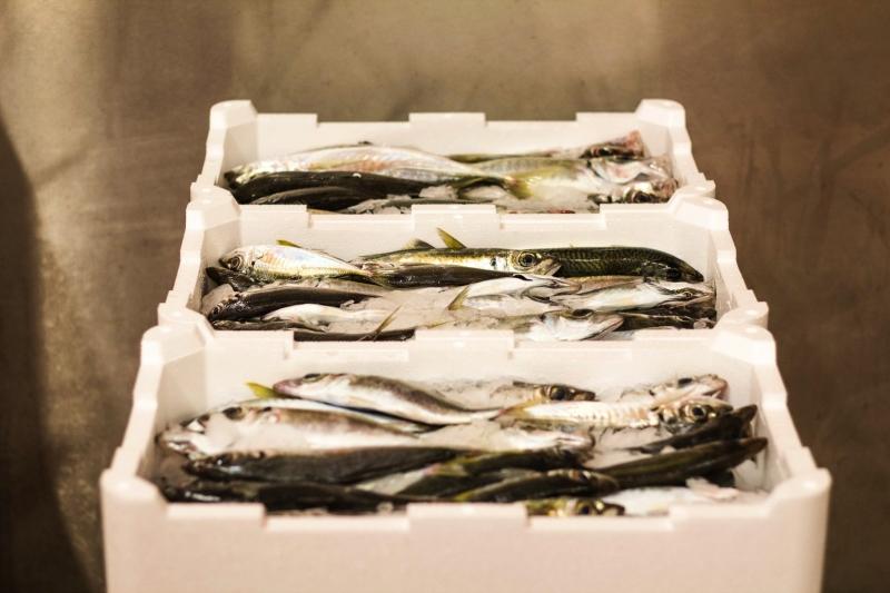 pesce fresco del mare adriatico. leader nel commercio prodotti ittici san benedetto del tronto