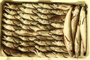 Pescato di San Benedetto del Tronto
